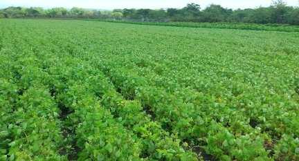 xtensión de los cultivos de alimentos por el campesino Rogelio, el sanluisero Héroe del Trabajo