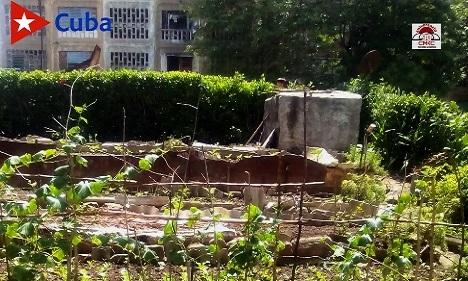 Agricultura Suburbana en el municipio Palma Soriano de la provincia Santiago de Cuba. Foto: Gleydis Sigas Pérez.