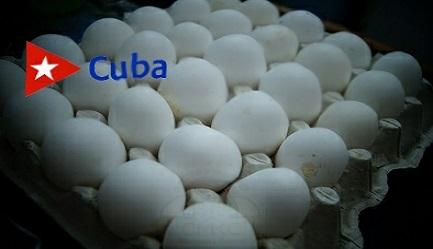 Programa avícola provincial en Santiago de Cuba