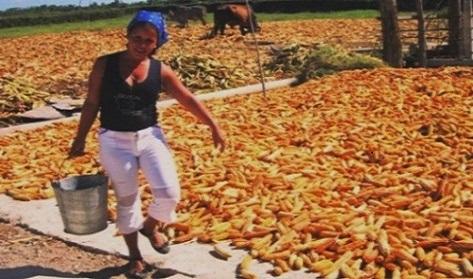 Laguna Blanca se reafirma como líder en la producción de maíz