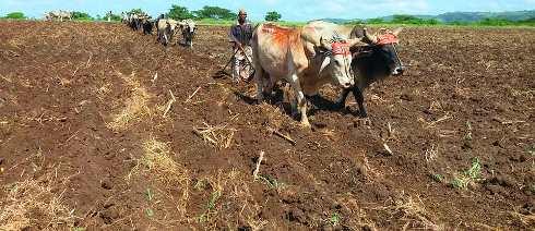 Siembra para asegurar mejor producción de alimentos en la agricultura en Santiago de Cuba.