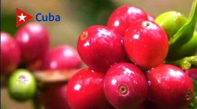 Ciencia y producción de café en Santiago de Cuba